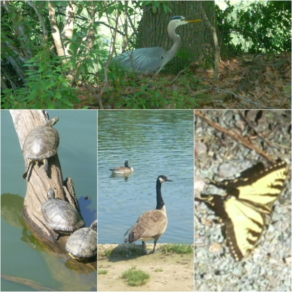 Noland Trail Wildlife page